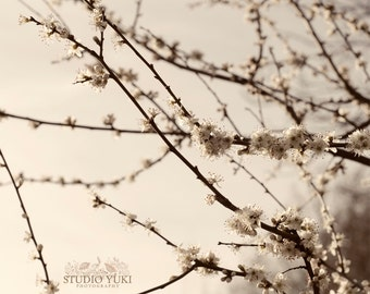 Cherry Blossom Photography, Sakura Tree, Dreamy Landscape, Botanical, Flowers, Floral, Nature Print, Serene, Zen, Bridal Gift, Pastel, Sweet