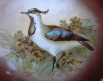 Antique Hand Painted Bird Plate, 10 Inches, Gold Edge