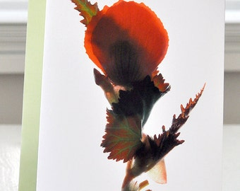 "Floral Note Card  5""x7"" A7 Begonia Dance Red Free US Shipping"