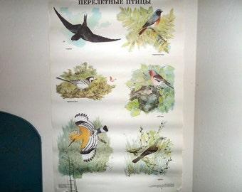 Large School Poster 1991  - Migrating birds