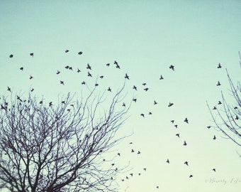 birds, flying, trees, teal, fine art photography