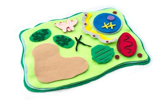 Plant Cell Model Felt Set - Science Toy -  Homeschool Biology - Educational Flannel Board