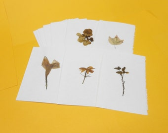 Real Dried Pressed Flower Cards and Envelopes, Set of Five (5) on Deckle Edged White Paper