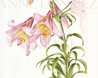 1964 Vintage lilies poster Pink flower print Lilies print Pink Perfection lily poster of lilies illustration French country decor