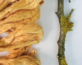 1 oz ( 28 g) Mulberry Silk Top Roving Fibre STRAW YELLOW - Hand dyed