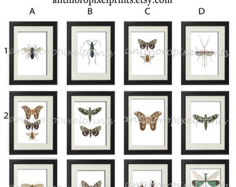 Spring insects Modern inspired Art Prints - Pick Any (4) 11x14 Prints (UNFRAMED)
