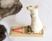 Taxidermy mouse on mouse trap. - NimbleMatters
