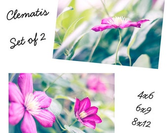 Clematis Set of 2 - Flower Photography Prints Pink and Green Spring Summer Home Décor Nature Wall Art 4x6, 6x9, 8x12