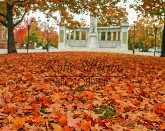 SALE Fall Foliage Monument Avenue in Richmond Va., Fall Decor Photo Art, Framed Photography Option