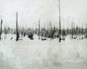 Original Fine Art Photography - Cypress Forest on Guste Island Swamp, Louisiana