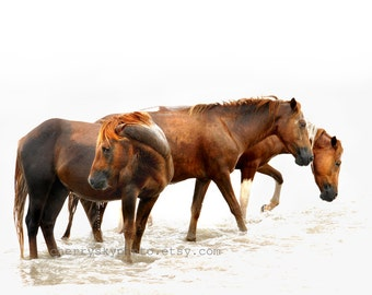 Wild Horses 2 - In the Surf - Rustic Country Sea Shore Ocean Beach Assateague Island Black and White Pony Mare Stallion Wall Art 8x10 Photo