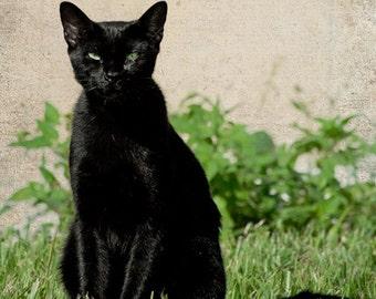 Black Cat Portrait - Fine Art Photograph Print Picture