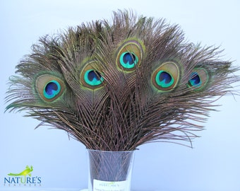 Peacock Feathers about 10-12 Inches High Quality Natural Feathers (50pcs)