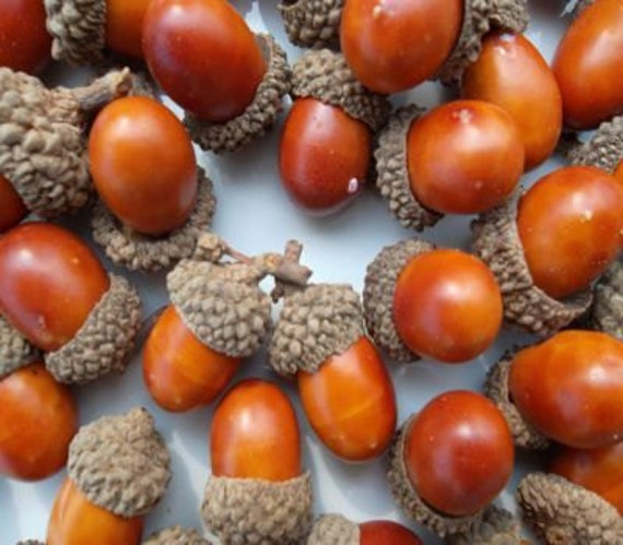50 plastic artificial acorns oak acorns faux by treeseedscom