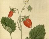Flower print, Flower illustration, Botanical drawing, 63