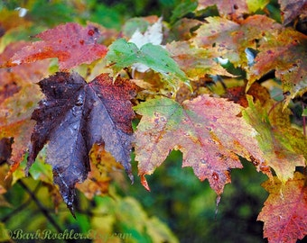 Fallage - Fall - Leaves - After the Rain - Nature Wall Art - Nature Photography - Home Decor - Vibrant Colors - Water Drops - 8x10