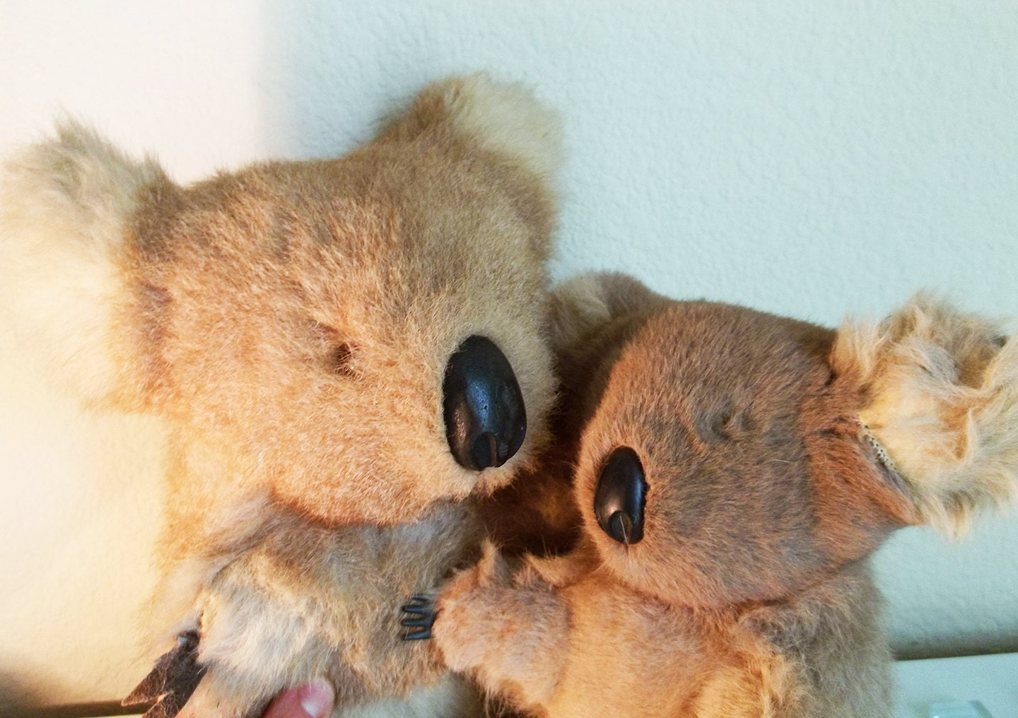 2 Fur Koala Bear Animals Australia Kangaroo by ...