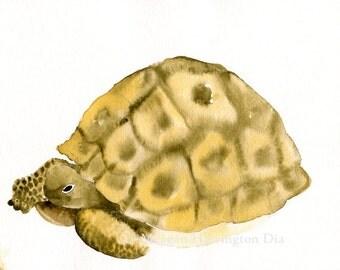 Animal Painting - Desert Tortoise -  Fine Art Print - Turtle art - Southwest painting
