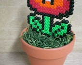 Potted Fire Flower plant