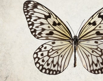 Neutral Spotted Butterfly Print - minimal wings photograph collector fine art print - Queen of the Sky