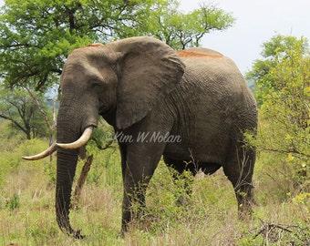 Wildlife decor Elephant Photograph, African Elephant, Fine Art Nature Photography, Wild African Animals, Nature photo, Safari animals