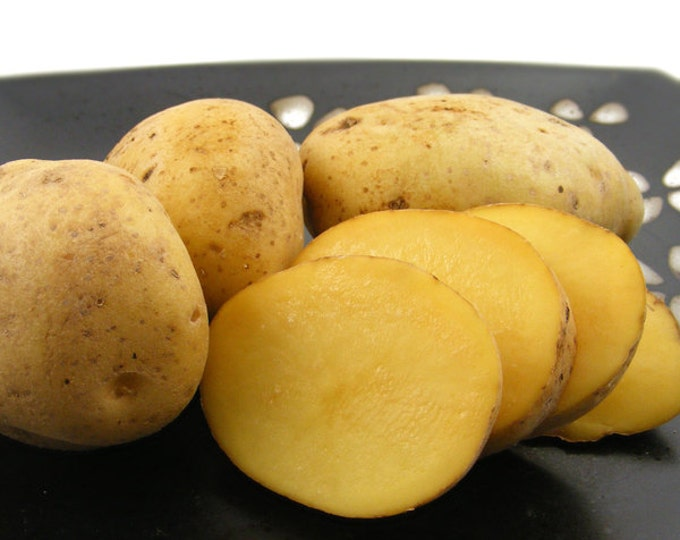 Fall Shipping Yukon Gold Potato Certified Organic and Virus Free 2 Lbs. Yellow Potatoes Non-GMO