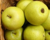 1 Dozen Artificial Fruit  Green Granny Smith Apples