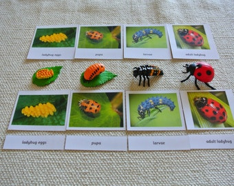 Montessori Ladybug Life Cycle 5 Parts Cards with Miniatures