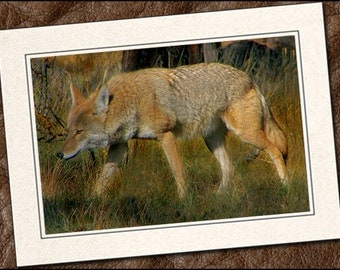 3 Coyote Photo Note Cards - 5x7 Coyote Note Card - Coyote Blank Note Cards With Envelopes - Coyote Greeting Cards Handmade (IN80)