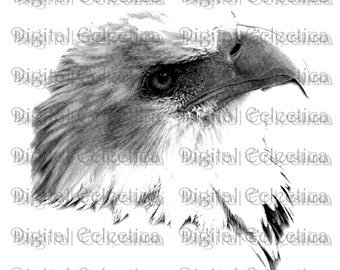 Bald Eagle Engraving. Eagle PNG. Animal PNG. Eagle Prints. Eagle Images. Eagle Pictures. Eagle Art. Eagle Clipart. Eagle Drawings. No. 0060.