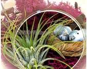 Fall Festival Birds Nest Tillandsia Bird Aviary, Hanging AIR PLANT TERRARIUM Kit, Glass Orb Globe, Woodland Decor Birthday Housewarming Gift - AGiftofNature