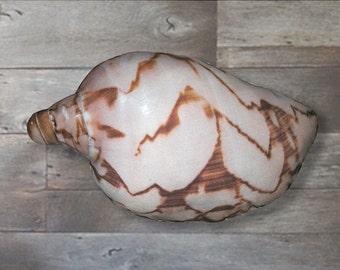Sea Shell Shaped Pillow - False Melon Volute