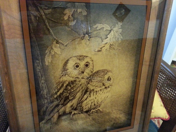 Dennis Curry Saw Whet Owls On Glass Print In Shadow Box