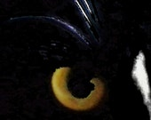 Cat's Eye Close Up -- Black and White Cat with Golden Eyes Fine Art Photography - Instant Download - PhotosbyMarilyn