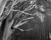 Half Moon Bay, Moss Beach, Pacific Northwest, Redwood Trees, California Coast - 8x10 - Signed Fine Art Photograph - Kimberly Kling