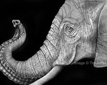 African Elephant Ink Drawing