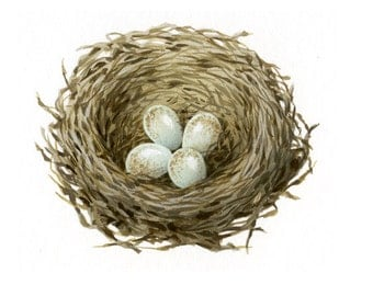 Bird illustration - Nest with eggs - bird art, print of original artwork