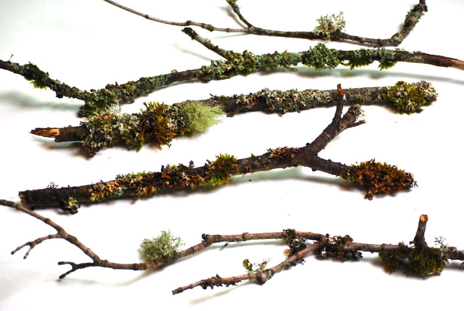 5 Branches Amp Twigs Covered In Natural Lichen And Moss Bonsai