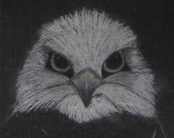 Eagle - 30 x 30cm Signed Limited Edition Print of a Pastel Drawing