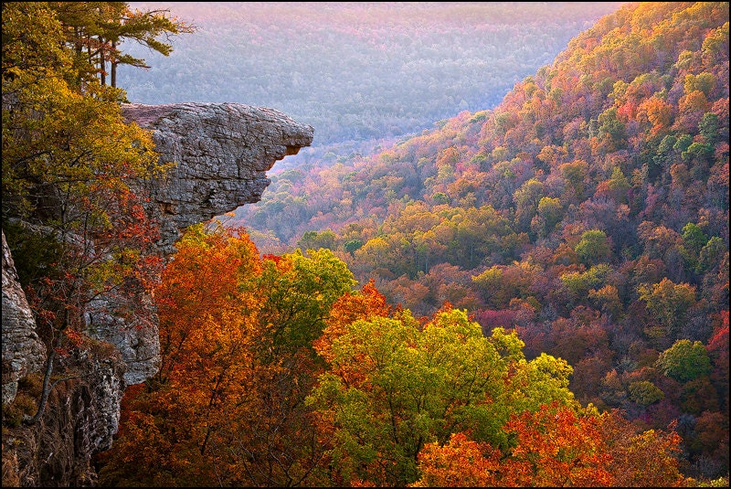 Image result for Whitaker point
