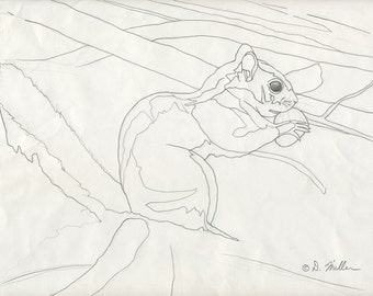 Red Squirrel Pencil Study Drawing - Darin Miller Wildlife Art