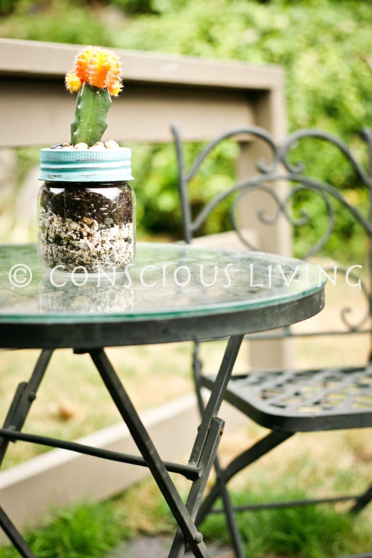petite plante grasse ou cactus en pot de joyau de par. Black Bedroom Furniture Sets. Home Design Ideas