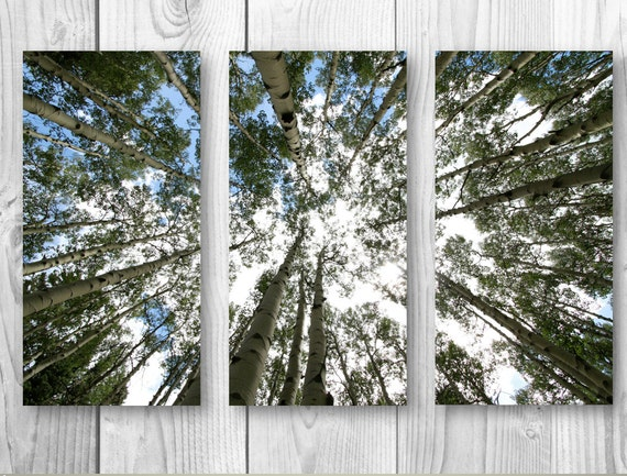 Three 16 x 24 or 12 x 18 inch Canvas Wall print green photo aspens nature art home decor rustic wall decal forest tree sky fine art print