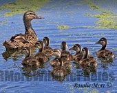 Photo of Ducks & Ducklings