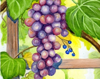 Summer Grapes On the Vine