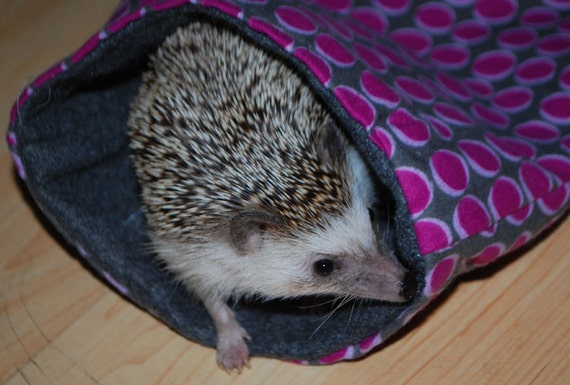 Items Similar To Many Patterns Small Pet Hedgehog Guinea