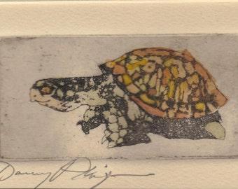 "original etching     ""Turtle"""