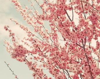 Pink Blossom Tree Fine Art Photography Digital Download