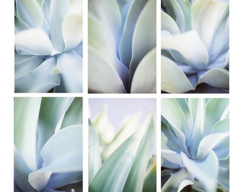 Agave Prints - Set of 6 - Gallery Wall, Abstract Wall Art, Fine Art Photography, Blue & Green Wall Art, Boho Prints, Nature Photography
