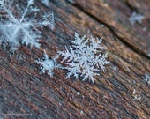 Snowflakes, Winter's Flowers, Stars from the Heavens, Montana Snowflakes, art quality Photograph or Greeting card